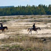 Na Błędowskiej dość często spotkać można miłośników jeździectwa.