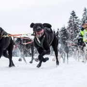 """Fotografia pod tytułem Wyścig psich zaprzęgów """"W krainie Wilka"""" autorstwa Macieja Goclona otrzymała trzecie wyróżnienie."""