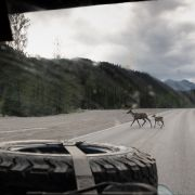 Droga numer 11 (Dalton Hwy) z Fairbanks do Deadhorse.
