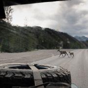 Droga numer 11 (Dalton Hwy) z Fairbanks do Deadhorse.