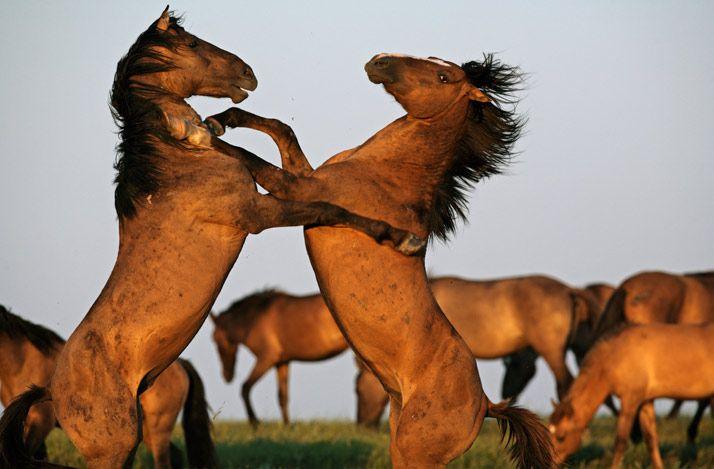 wild-horses-01-714