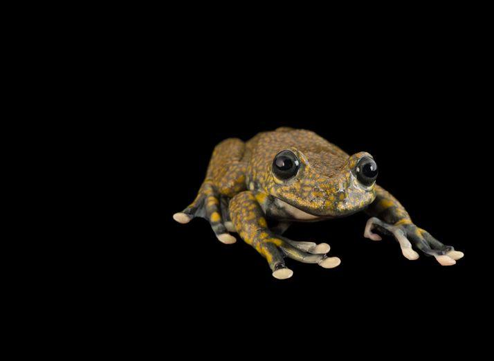 amphibian-01-714