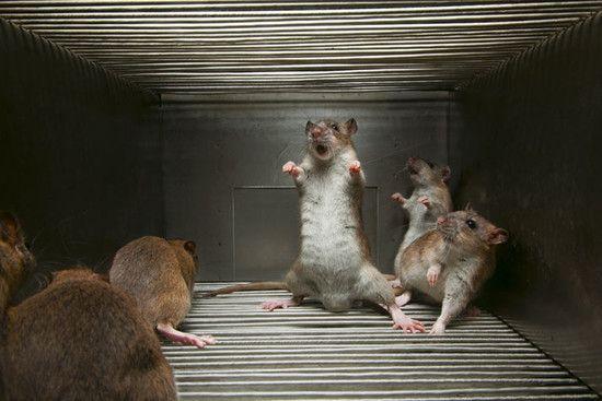 09_awesome_angry_rats_71_534273495d_01