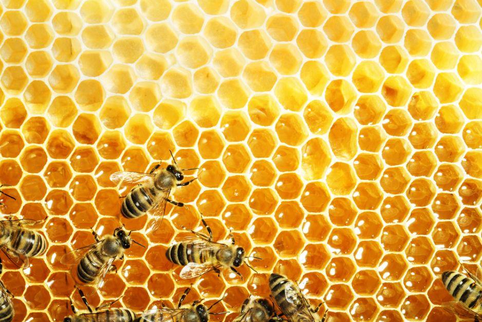 лук детям о пчелиных сотах в картинках воспоминаний