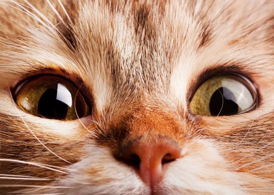 Dlaczego Koty Boją Się Ogórków Naukowiec Wyjaśnia National