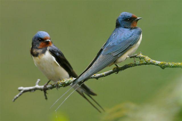 Przywitaj Wracające Do Polski Ptaki Obserwuj I Notuj National