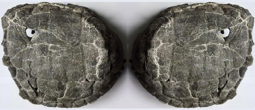 skorupa żółw śmieci śląsk