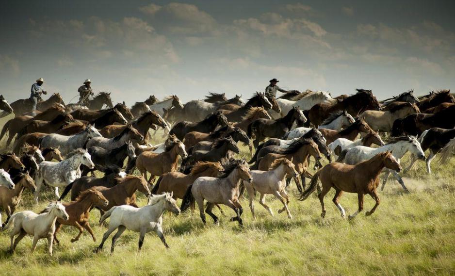 Konie na zdjęciach fotografów National Geographic