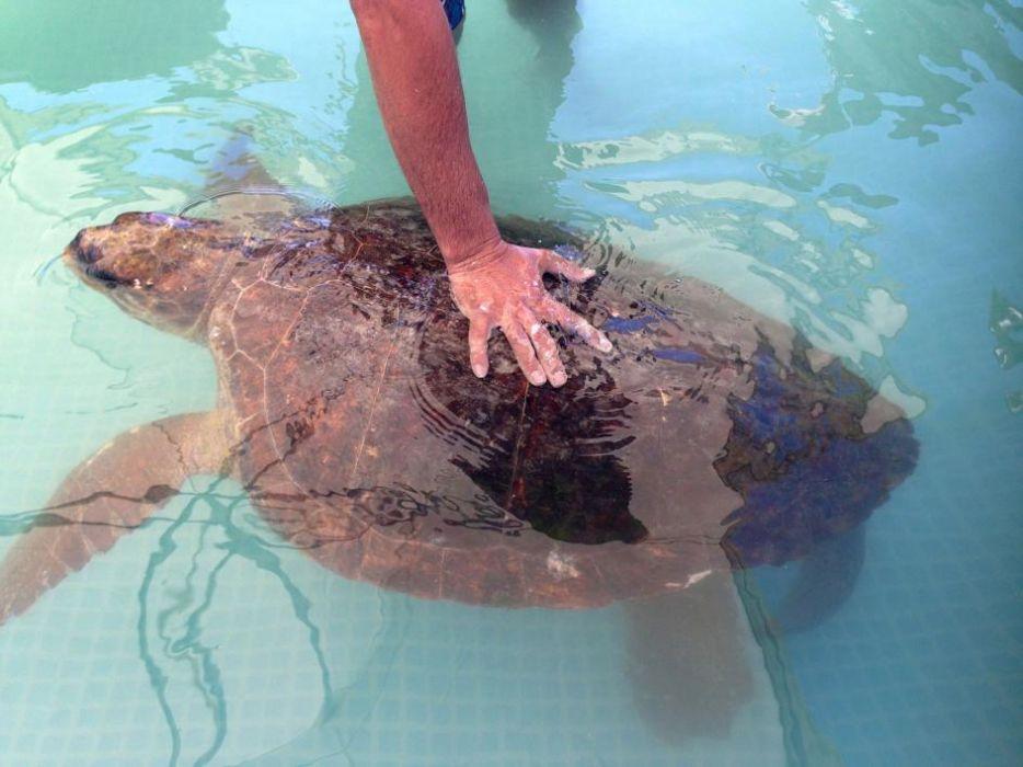 Żółw męczony dla selfie odzyskuje siły