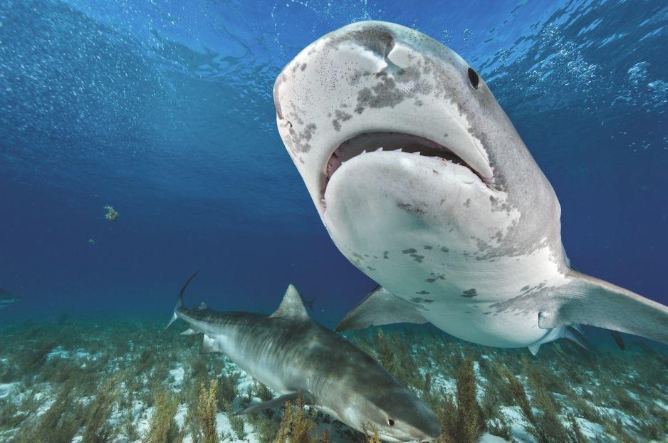 Lato rekinów