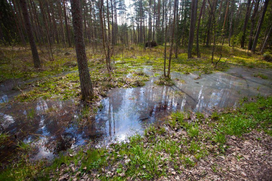 To miejsce jak z powieści J.R.R. Tolkiena. Magiczne bagna Łotwy