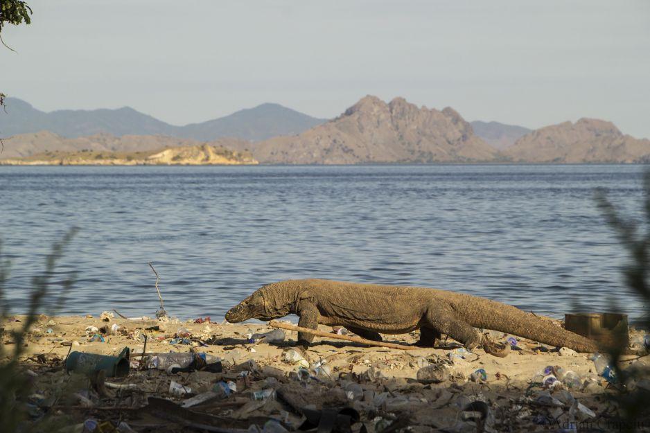 Komodo -  kraina smoków