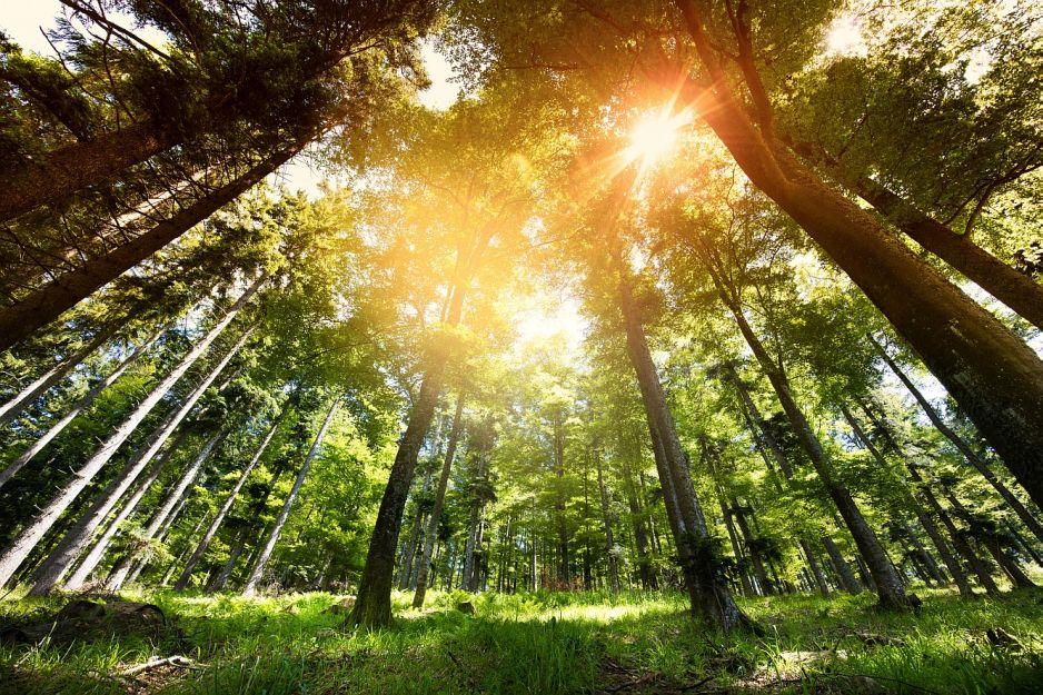 Zielone skarby planet