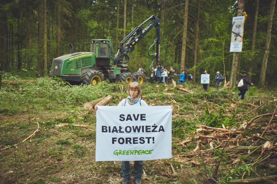 Protest w Puszczy Białowieskiej
