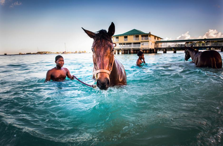 Codzienny rytuał: poranna kąpiel koni w oceanie