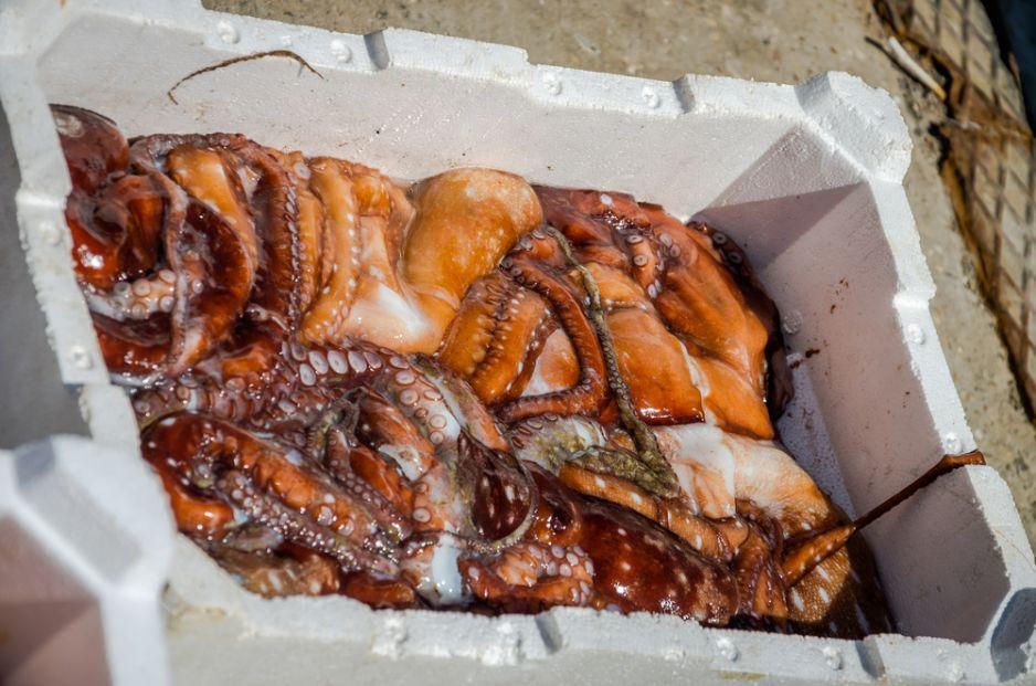 Targ rybny w porcie Fiumicino