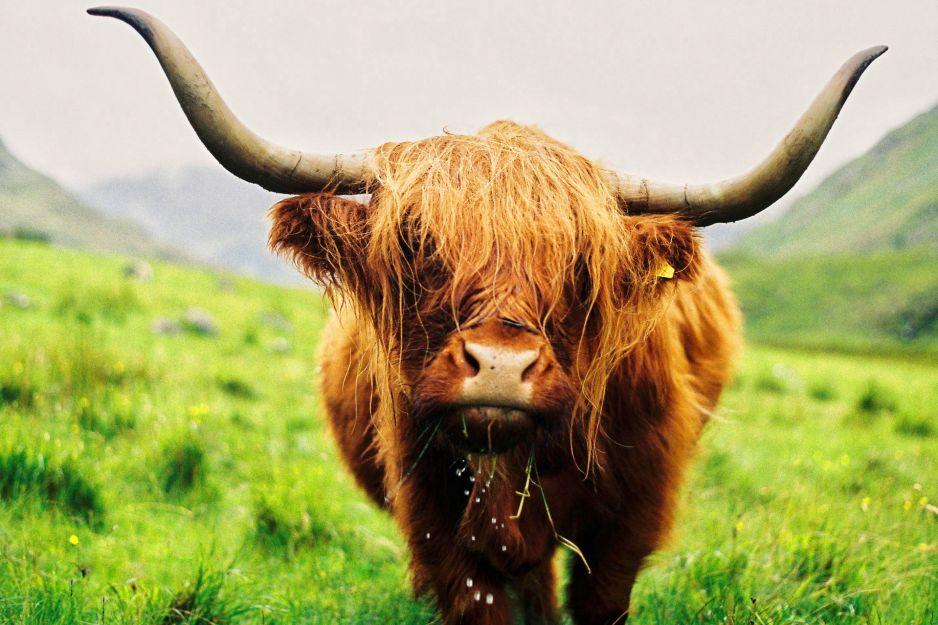"""Szkocja: """"wszechobecne poczucie wolności"""""""