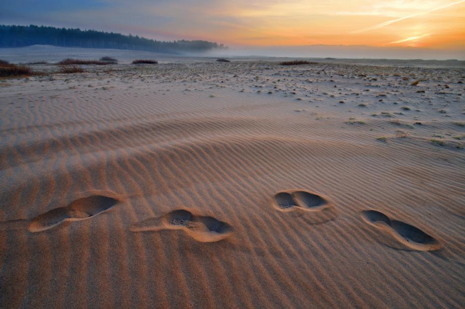 Patrząc od strony Chechła Błędowska wygląda jak największe pustynie świata.