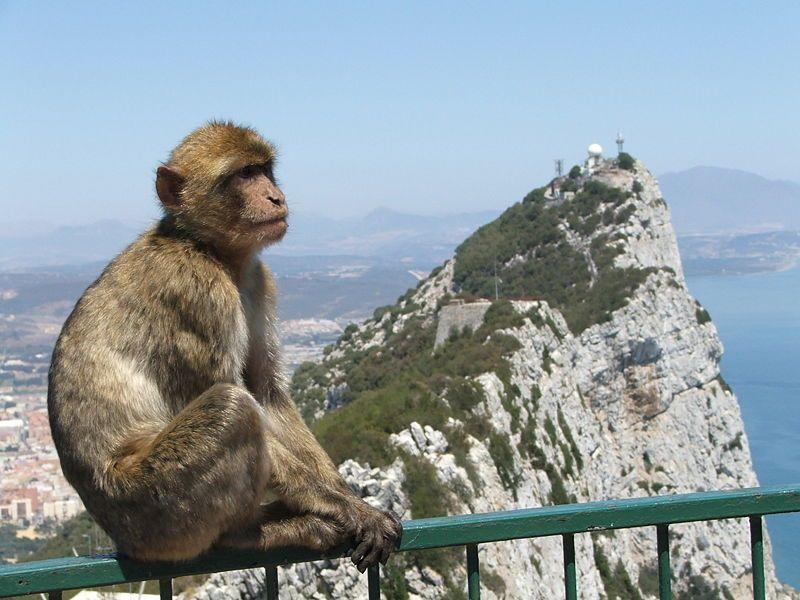 Skała Gibraltaru