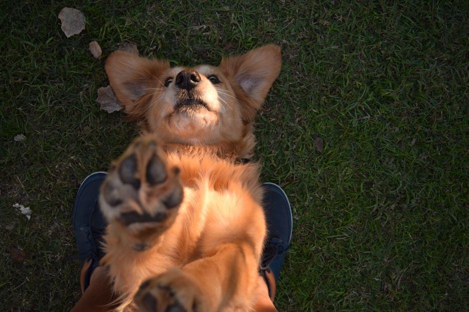 Ci, którzy mają psy wiedzą doskonale, że łapy ich podopiecznych mają bardzo... specyficzny zapach. Dlaczego?