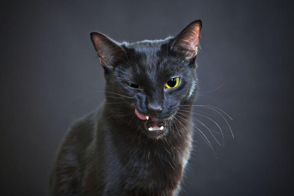 Czarny kot oznacza pecha? Bzdura! Są miejsca, gdzie przynosi tylko szczęście