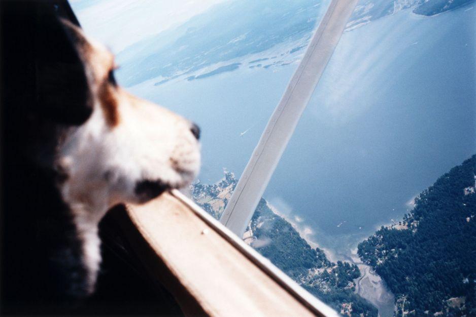 Oto lista zwierząt zakazanych na pokładach samolotów. Chomiki i pająki nie mogą nas uspokajać podczas lotu
