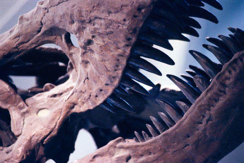 Ten dinozaur mógł być jeszcze większy i straszniejszy niż jego krewniak (fot. Getty Images)