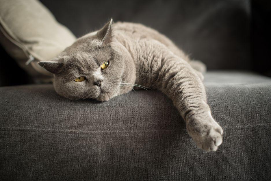 Koty rozumieją, gdy wołasz je po imieniu. Ignorują cię, bo tak chcą