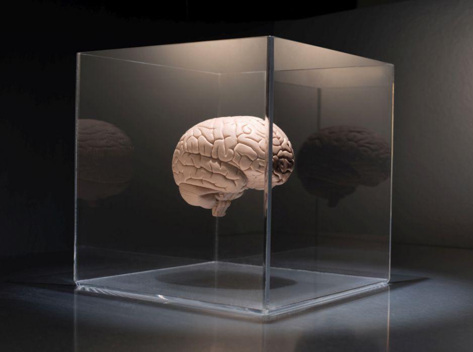 """Jak długo mózg jest aktywny po śmierci? Nowe badanie zwraca uwagę na """"depolaryzację"""""""
