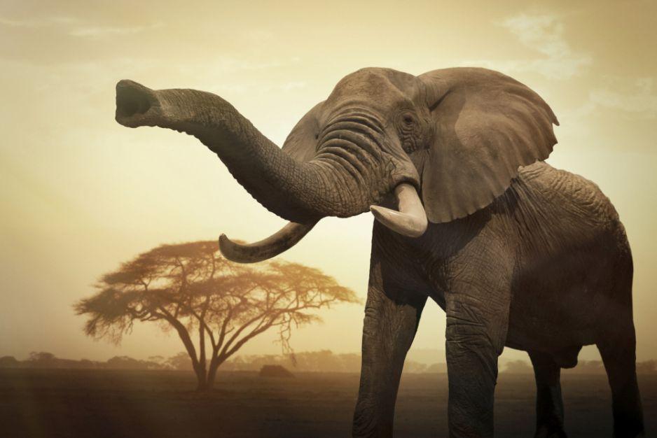 """Botswana znosi zakaz polowań na słonie. """"Spodziewajcie się masowej rzezi"""""""