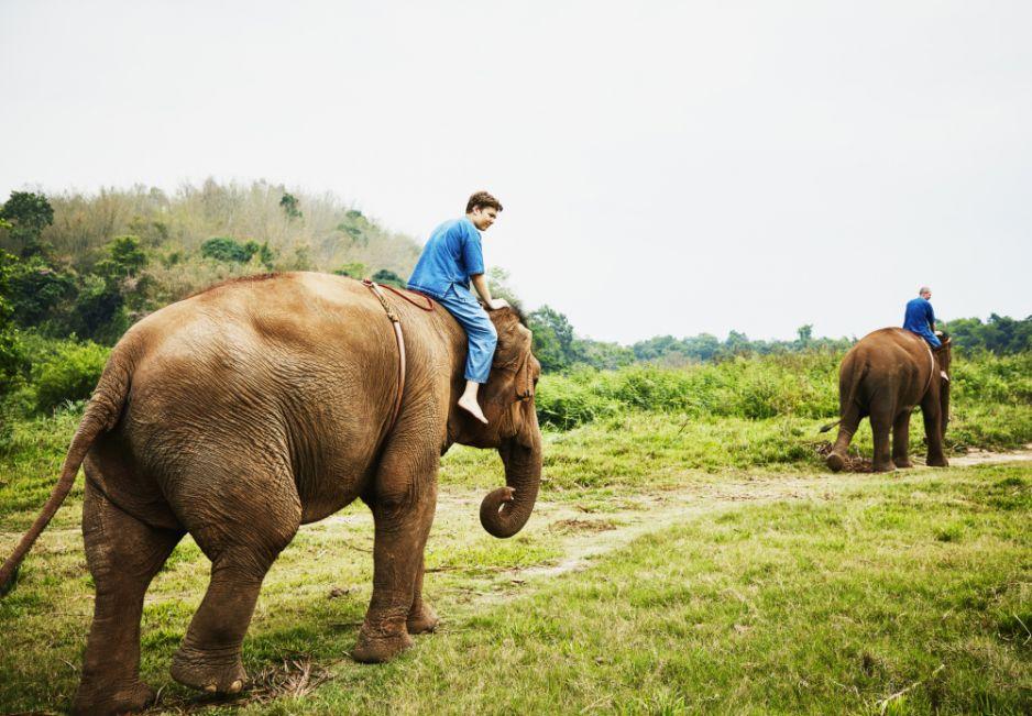 Jak podróżować etycznie i napędzać zooturystyki? 9 RAD