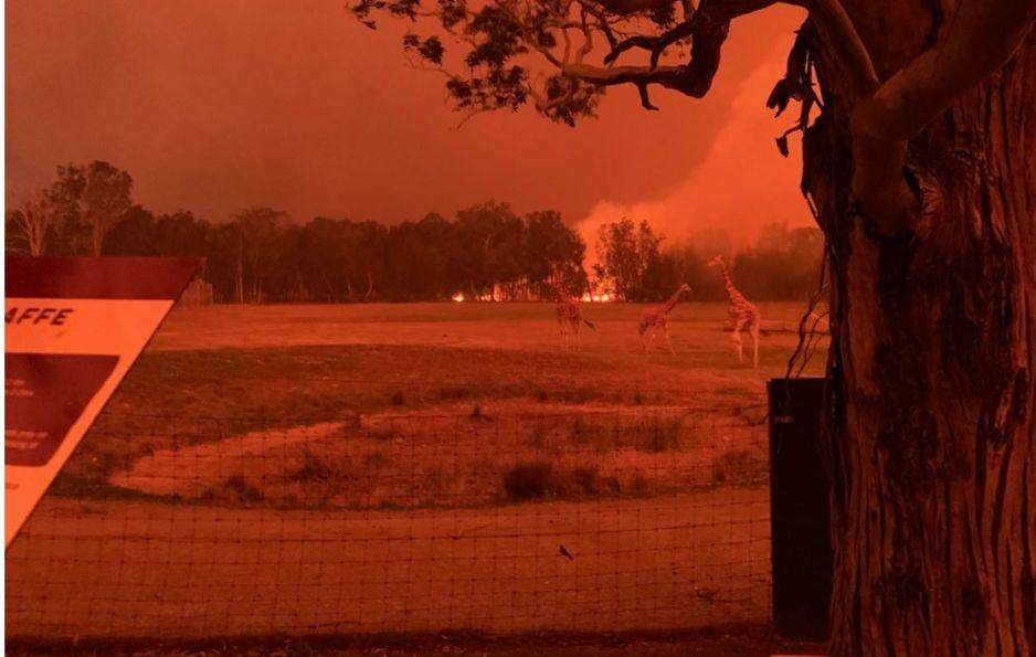 Pożary szalejące w Australii zabarwiły niebo na czerwono (fot. Twitter)