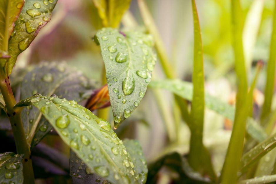 Już jedna kropla deszczu potrafi wytworzyć energię (fot. Getty Images)