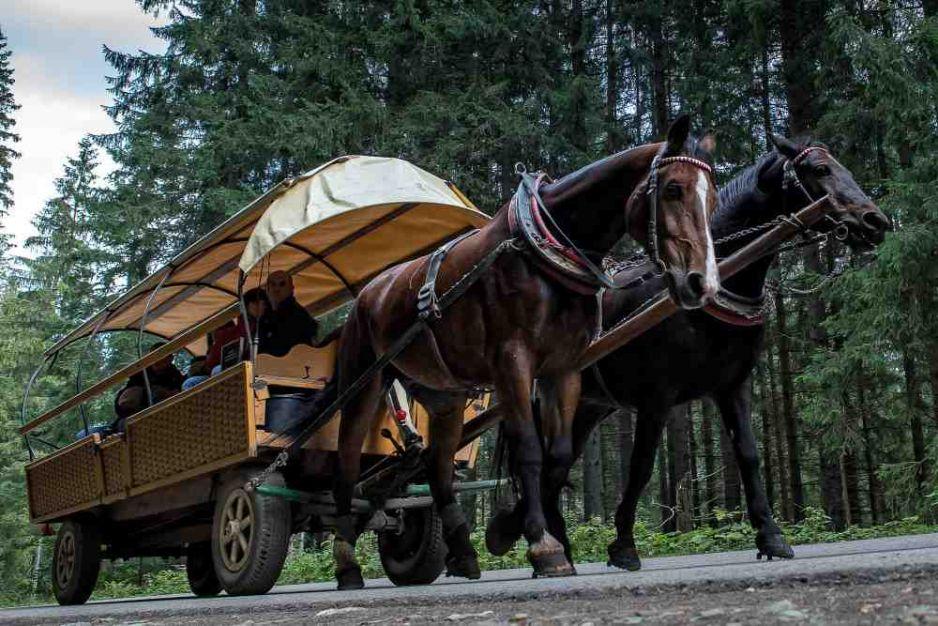 Szlak do Morskiego Oka. fot. Michal Wozniak/East News