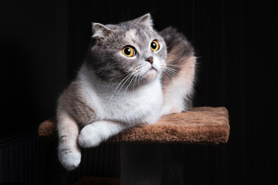 Koty znają swoje imiona. Wiadomo dlaczego przychodzi im to trudniej niż psom