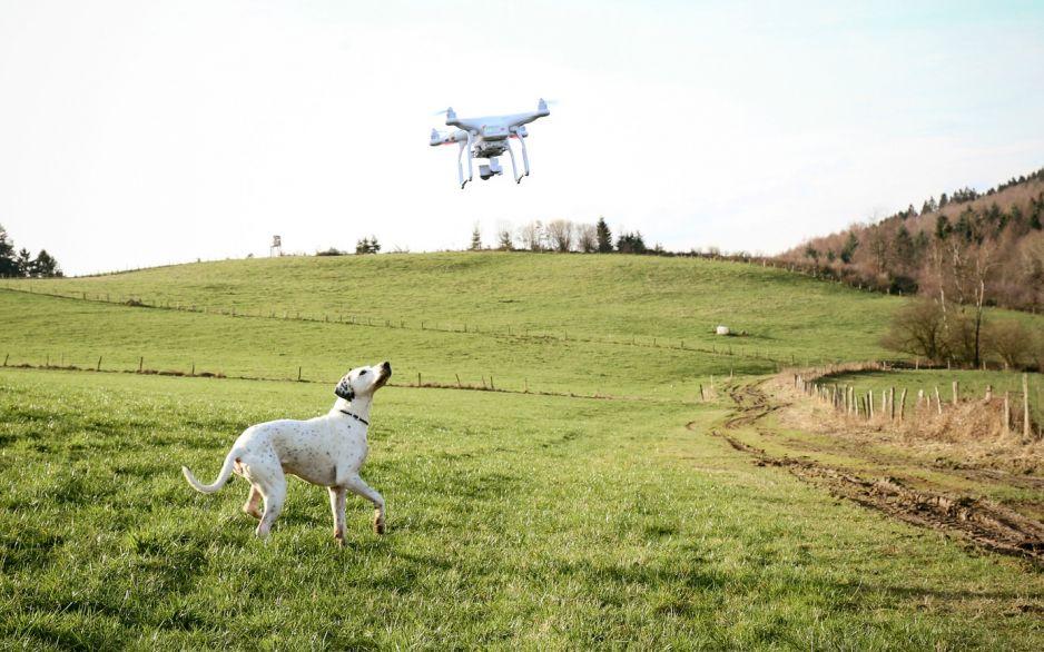Spacer z psem w czasie kwarantannry - jak to zrobić? (fot. Getty Images)