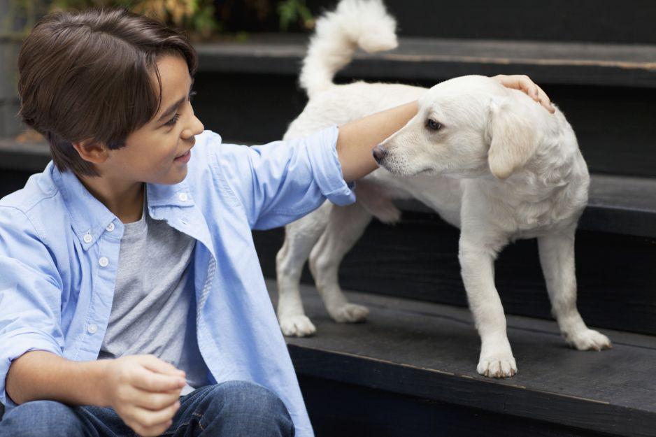 Okazuje się, że psy są bardzo podobne do ludzi (fot. Getty Images)
