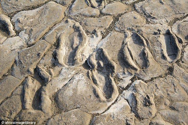 Ślady mogą liczyć od 6 000 do 19 000 lat (fot.  William Harcourt-Smith, CC BY-ND)