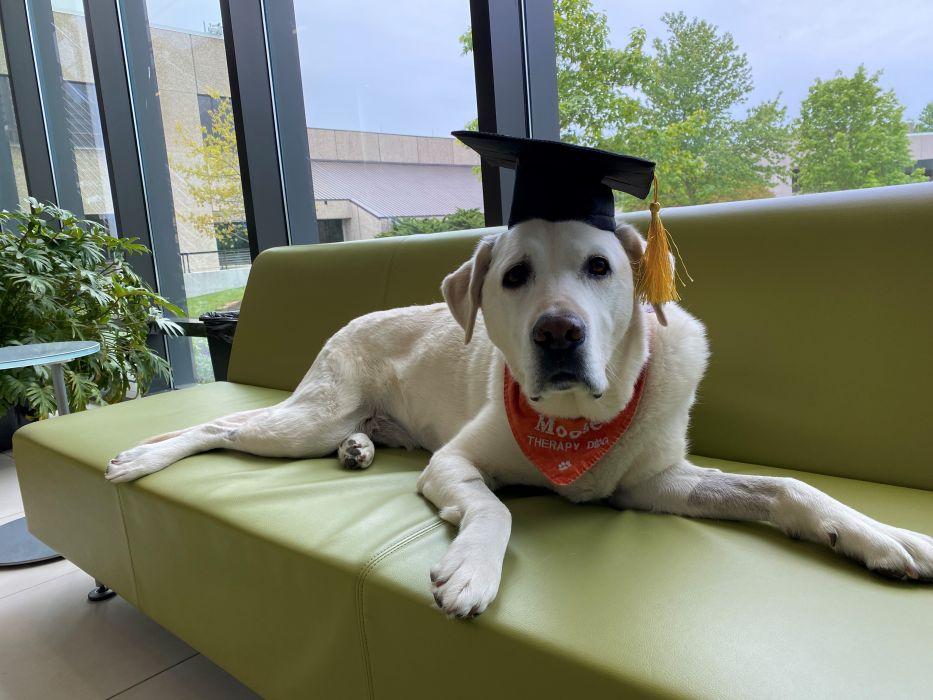 Ten labrador ma doktorat, a ty nie fot. Virginia Tech
