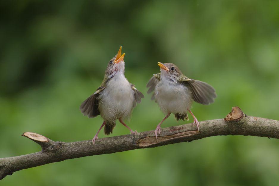 Ptaki posługują się różnymi dialektami (fot. Getty Images)