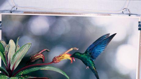 kolibry_88_08_d