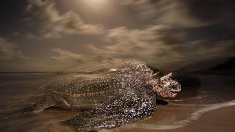 leatherbacks-16-714