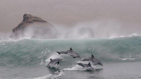 0310-bottlenose-dolphins-714