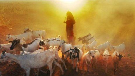 SOMALIA_Ethi-Gode-Sheep23_kopie_01