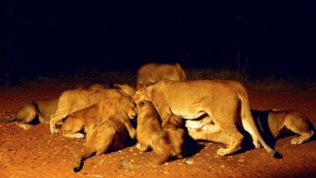 Namibia: Świat za tysiąc lat