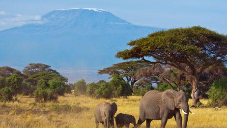 Tanzania: Melodia Afryki