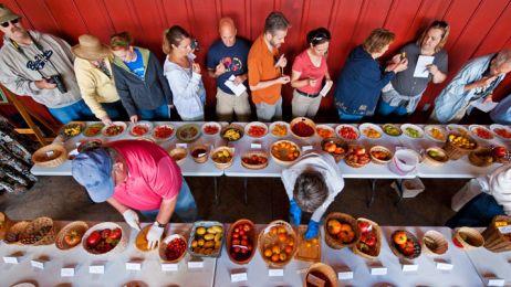 15-heirloom-tomato-variety-714