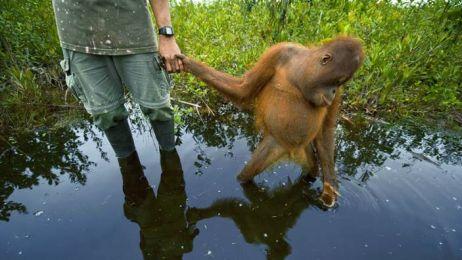 Małpi przewodnik: Sztuka Surwiwalu