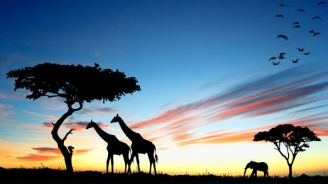 Parki narodowe Afryki