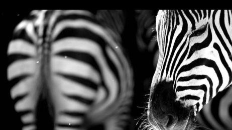 Galeria tygodnia: W świecie zwierząt